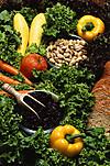 260pxvegetarian_diet